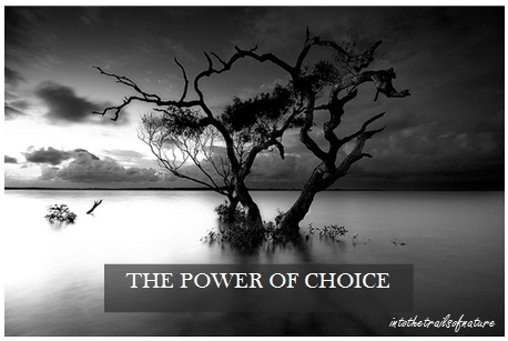 the power of choice 1